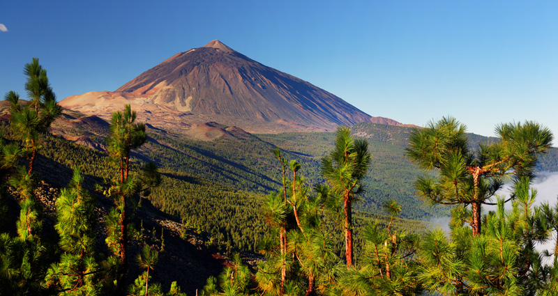 Discover south Tenerife in springtime
