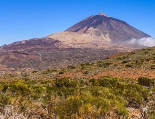 Autumn in Tenerife: wine, wild mushrooms and spring tides